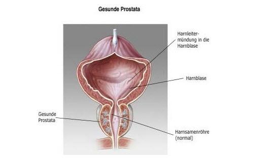 Gesunde Prostata