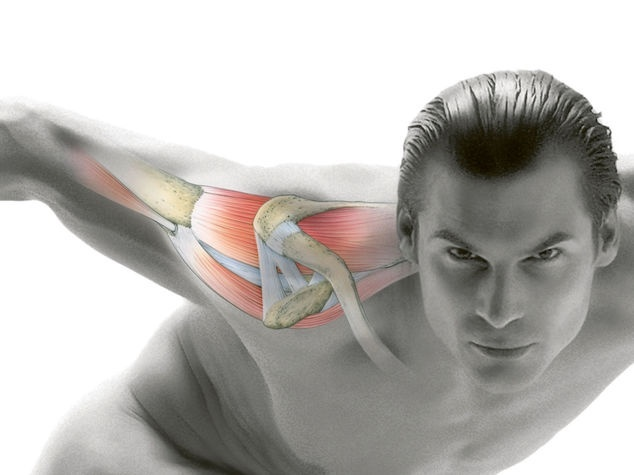 Schultergelenk in Bewegung