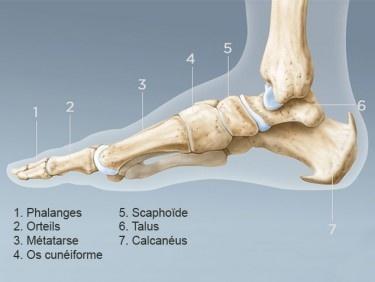 Déchirure ou élongation des ligaments de la cheville ? Mesures immédiates, traitement et prévention