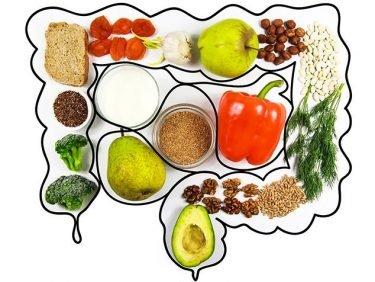 La bonne santé commence dans l'intestin