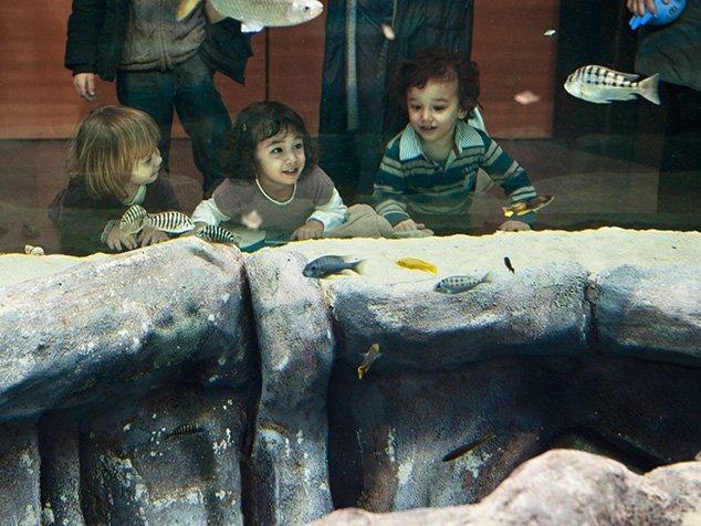 Aquarium auf der Notfallstation