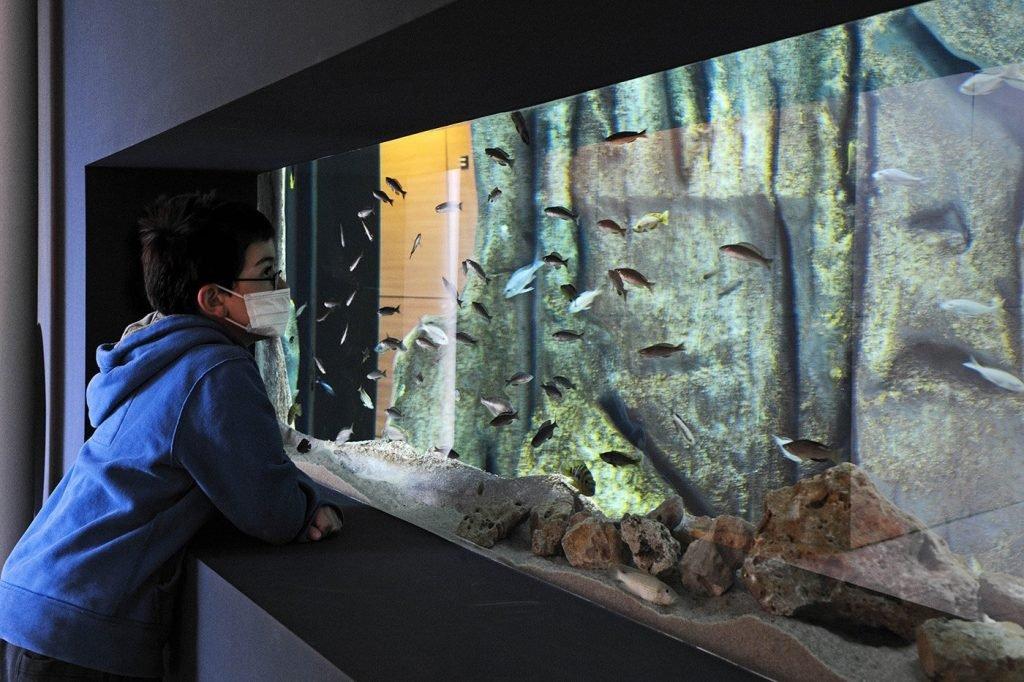 Aquarium in der Notfallstation
