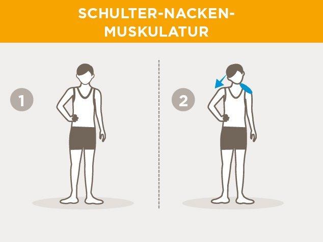 Laufsport-Aufwärmen-Schulter-Nacken-Muskulatur
