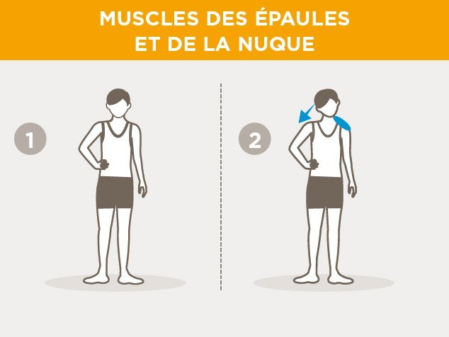 exercices-échauffement-muscles des épaules et da la nuque